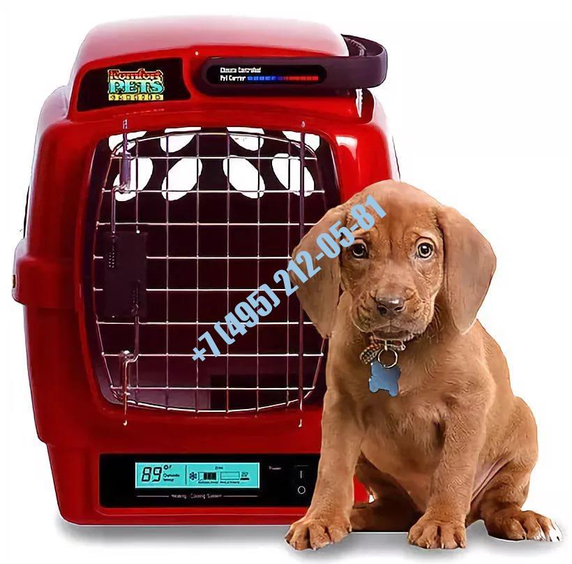Справка для перевозки собаки