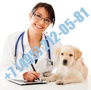Ветеринарная справка (форма 1)