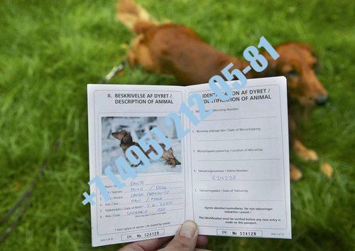 Ветпаспорт для собаки